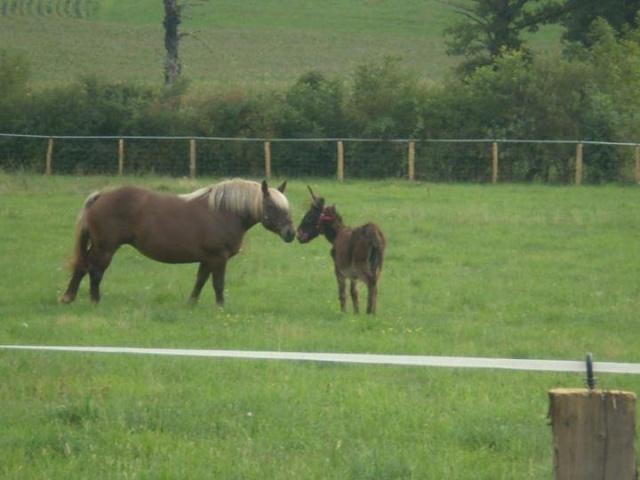 BOURRIFEE, renommée JOSETTE (dite PÉPÉTTE) - ONC âne née en 2010 - adoptée en août 2011 par Stephele12 - Page 2 31746211