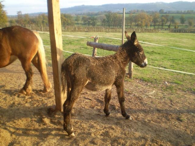 BOURRIFEE, renommée JOSETTE (dite PÉPÉTTE) - ONC âne née en 2010 - adoptée en août 2011 par Stephele12 - Page 2 31833710