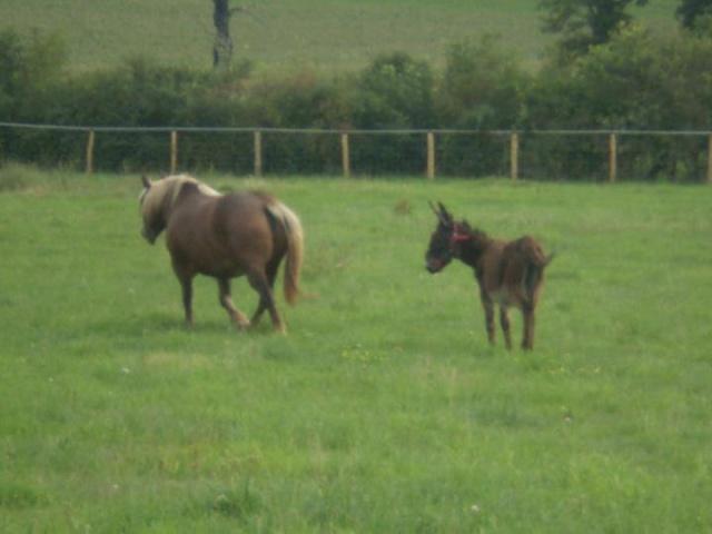 BOURRIFEE, renommée JOSETTE (dite PÉPÉTTE) - ONC âne née en 2010 - adoptée en août 2011 par Stephele12 - Page 2 32119210