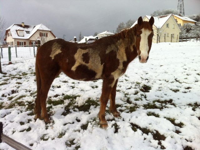 WALANIE (VANILLE) - ONC poney - adoptée en avril 2011 par voulk  - Page 5 48696010