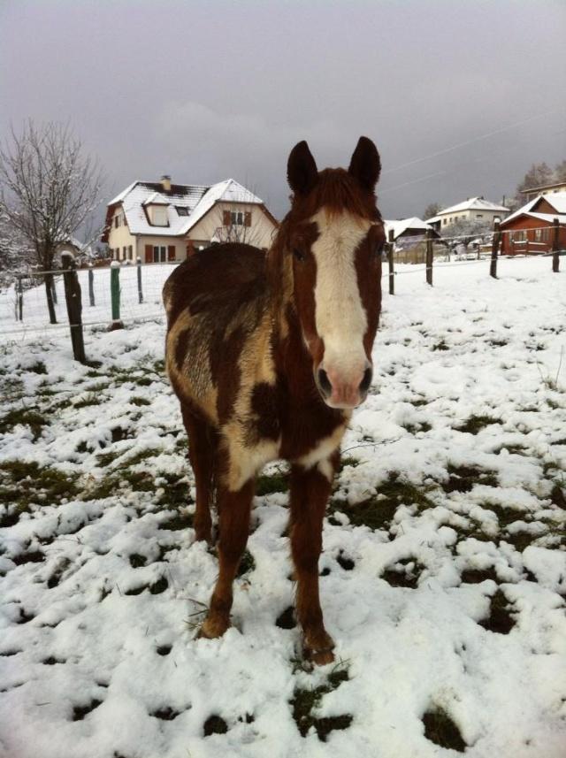 WALANIE (VANILLE) - ONC poney - adoptée en avril 2011 par voulk  - Page 5 53765210