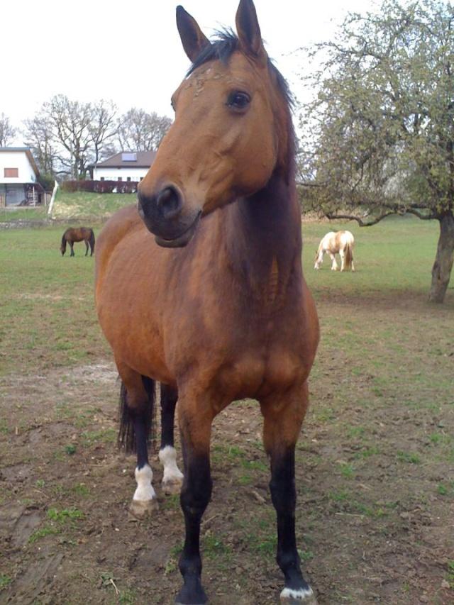WALANIE (VANILLE) - ONC poney - adoptée en avril 2011 par voulk  - Page 5 54712411