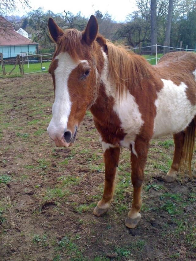 WALANIE (VANILLE) - ONC poney - adoptée en avril 2011 par voulk  - Page 5 55175410