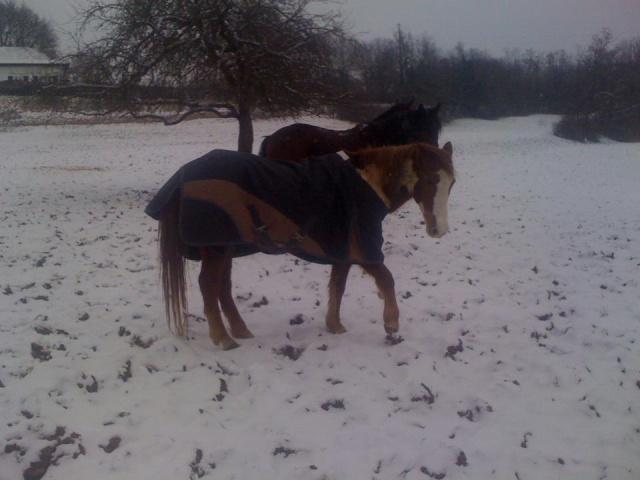 WALANIE (VANILLE) - ONC poney - adoptée en avril 2011 par voulk  - Page 5 Walani12