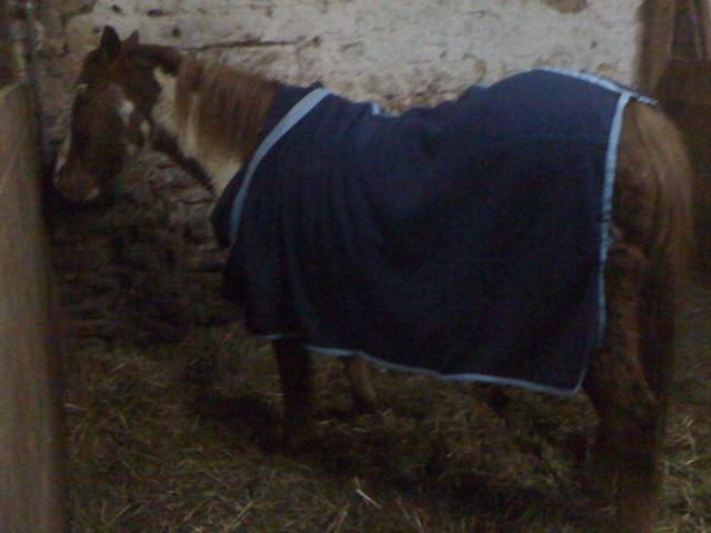 WALANIE (VANILLE) - ONC poney - adoptée en avril 2011 par voulk  - Page 5 Walani13