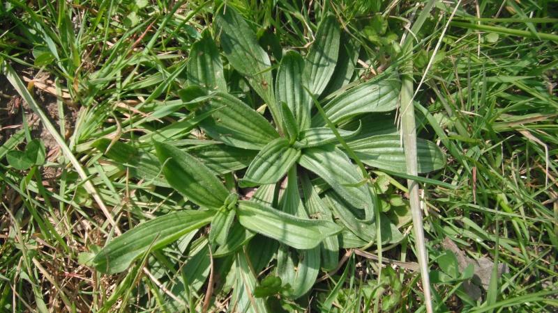 Herbier de printemps 24_pla10