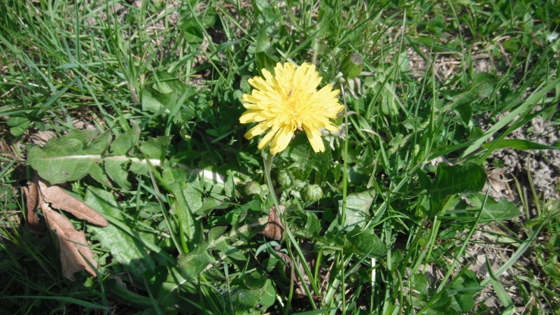 Herbier de printemps 25_pis10