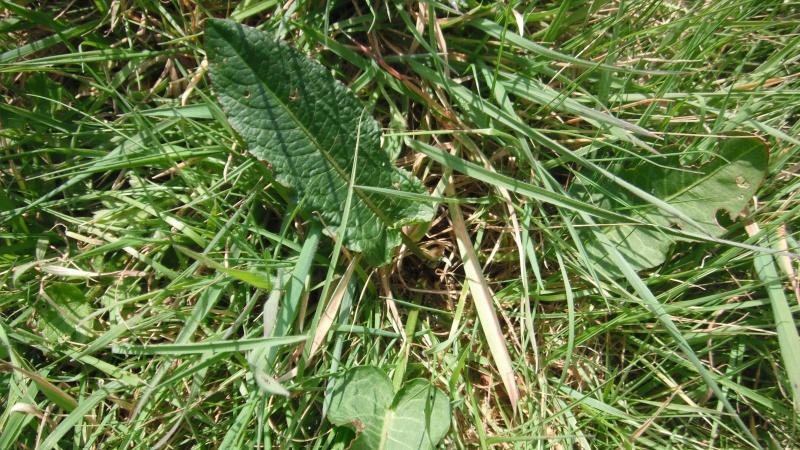 Herbier de printemps 26_pat10