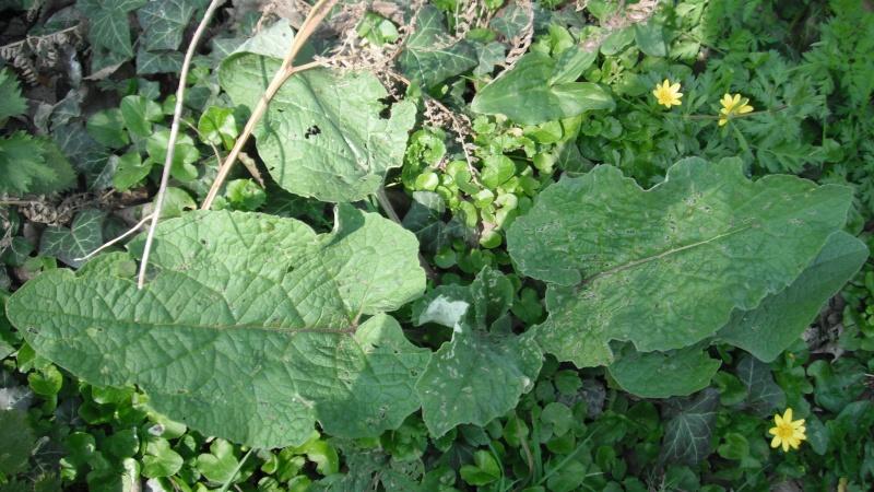 Herbier de printemps 27_gra10