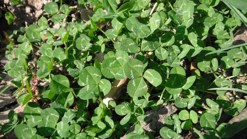 Herbier de printemps 34_tra10
