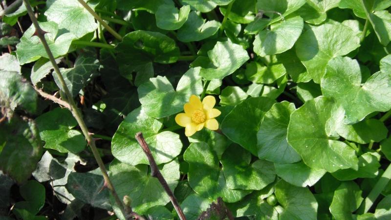 Herbier de printemps Dscf4513