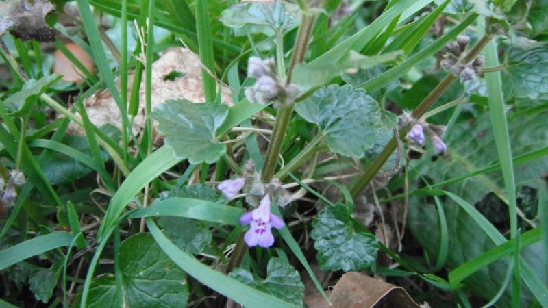 Herbier de printemps Dscf4514