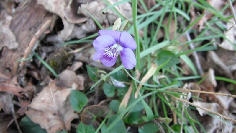 Herbier de printemps Dscf4515