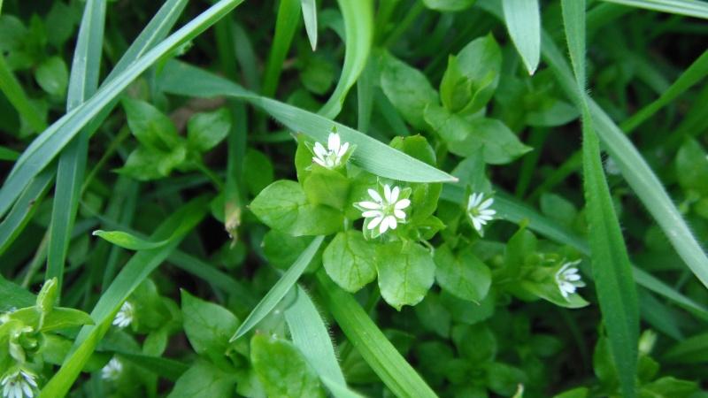 Herbier de printemps Dscf4518