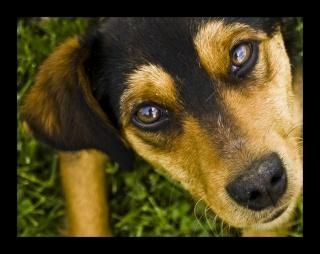 amis des bêtes, cliquez pour les animaux ! clicanimaux…  - Page 2 7ff51d10