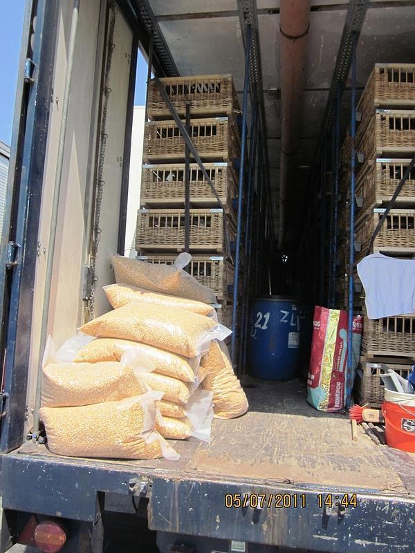 Le transport de pigeons voyageurs Pigeon16
