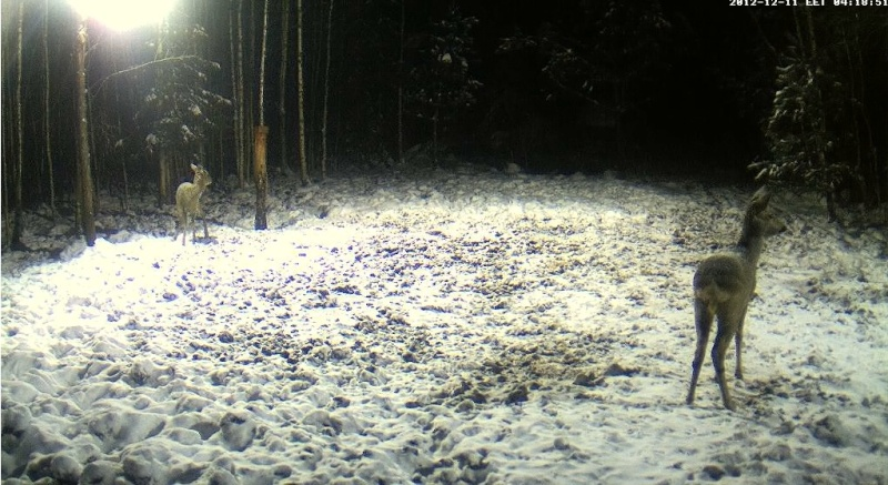 Boars cam, winter 2012 - 2013 - Page 2 21112110