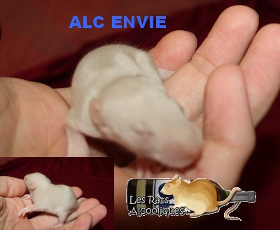 ALC Yeni Raki x IND Aquavit - 06/05/12 - Page 4 J11-en10