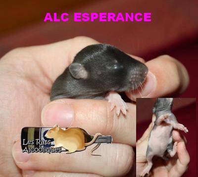ALC Yeni Raki x IND Aquavit - 06/05/12 - Page 4 J11-es10
