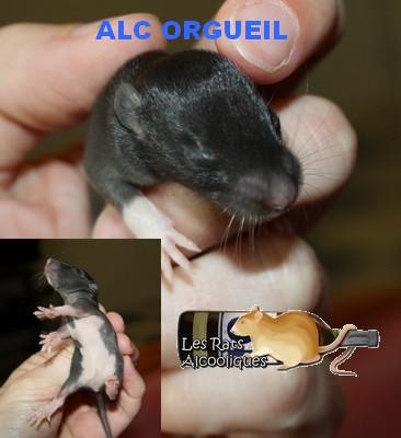 ALC Yeni Raki x IND Aquavit - 06/05/12 - Page 4 J11-or11