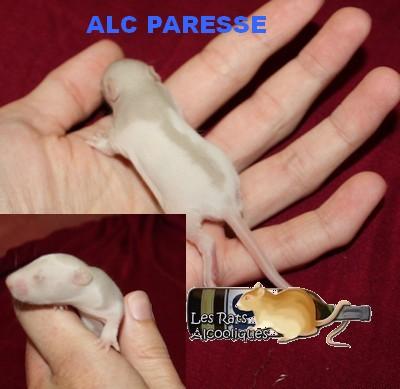 ALC Yeni Raki x IND Aquavit - 06/05/12 - Page 4 J11-pa11
