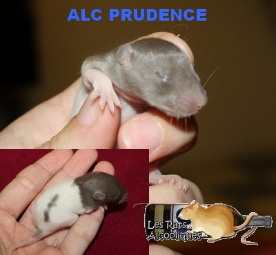 ALC Yeni Raki x IND Aquavit - 06/05/12 - Page 4 J11-pr11
