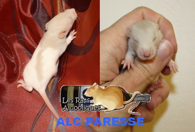ALC Yeni Raki x IND Aquavit - 06/05/12 - Page 4 J15-pa10