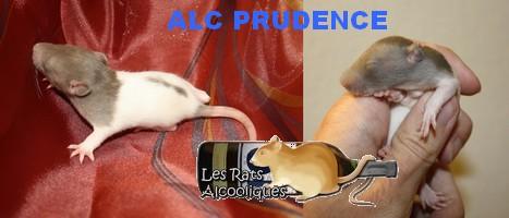 ALC Yeni Raki x IND Aquavit - 06/05/12 - Page 4 J15-pr10