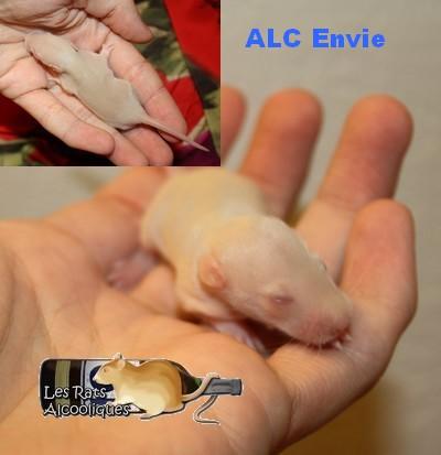 ALC Yeni Raki x IND Aquavit - 06/05/12 - Page 3 J9-env10