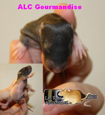 ALC Yeni Raki x IND Aquavit - 06/05/12 - Page 3 J9-gou10
