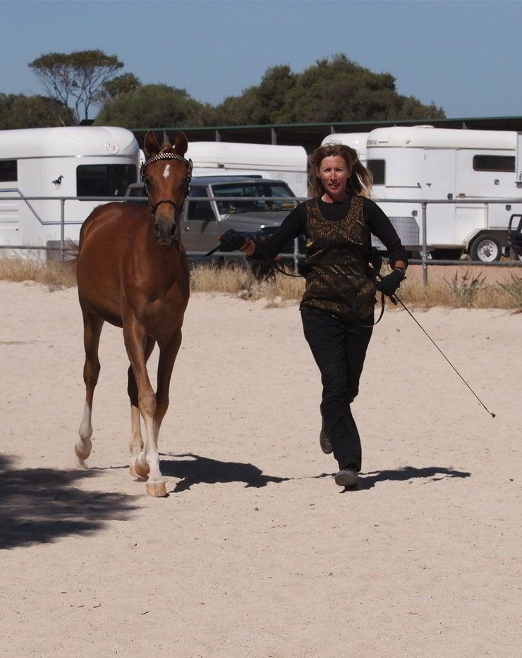 Chestnut yearling part bred Arabian Filly Rsz_sa11