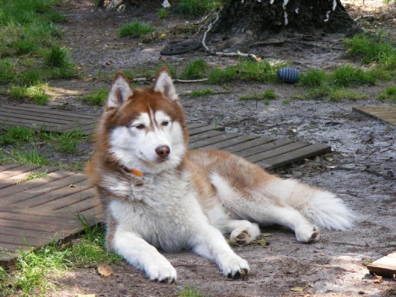 Nos loups grandissent, postez nous vos photos - Page 6 Dscf0613