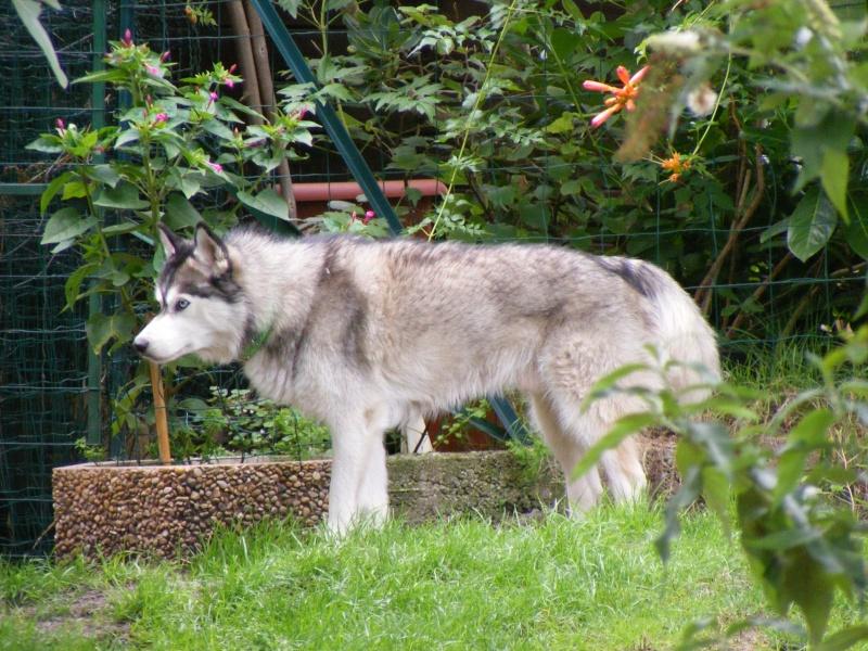 Nos loups grandissent, postez nous vos photos - Page 6 Dscf0920
