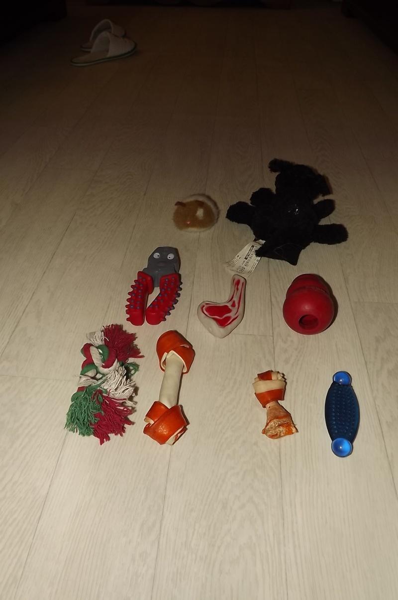 Les accessoires de vos animaux en particulier les chiens.  Dscf3510