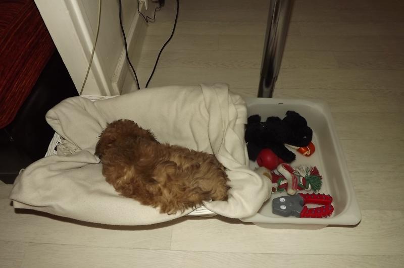 Les accessoires de vos animaux en particulier les chiens.  Dscf3511