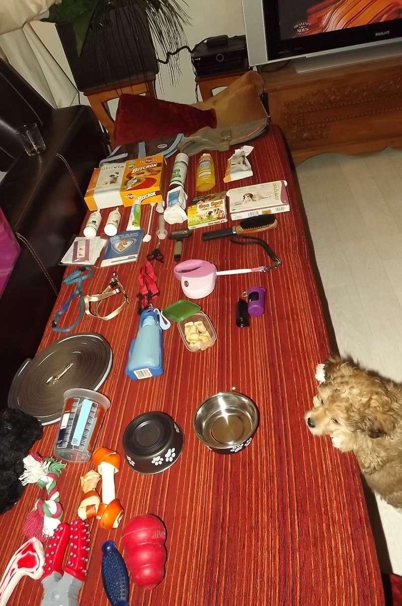 Les accessoires de vos animaux en particulier les chiens.  Dscf3512