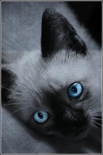 Petit Echo ~ Chaton du Tigre ~ Mâle {LIBRE} Image_40