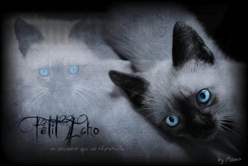 Petit Echo ~ Chaton du Tigre ~ Mâle {LIBRE} Image_41
