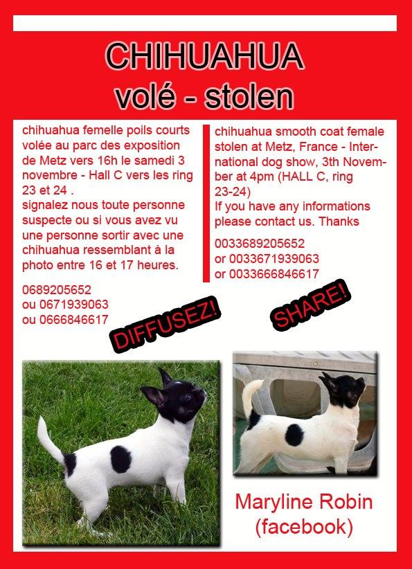 Chihuahua volé à l'exposition de Metz 32348_10