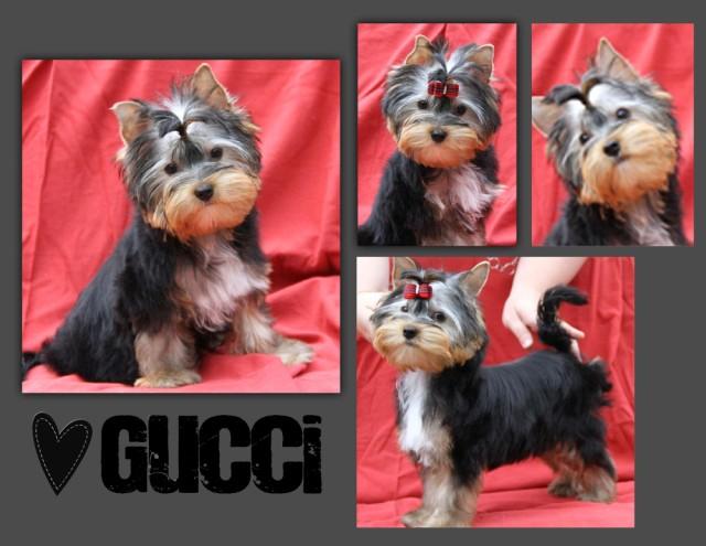 Gucci attend une famille pour l'aimer - Pas coton Gucci_10