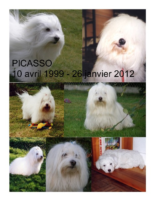 Picasso 10 avril 1999 - 26 janvier 2012 Picass11