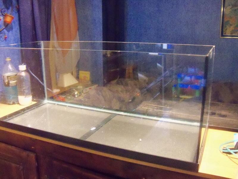 et de .... evolution d'un bac jusqu'a la fish room !! 100_2516