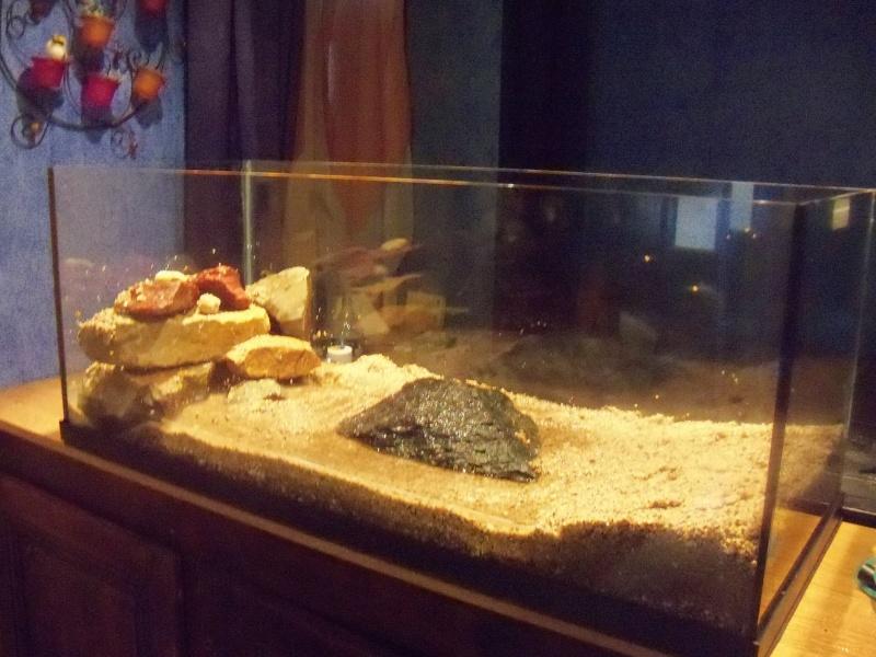 et de .... evolution d'un bac jusqu'a la fish room !! 100_2518