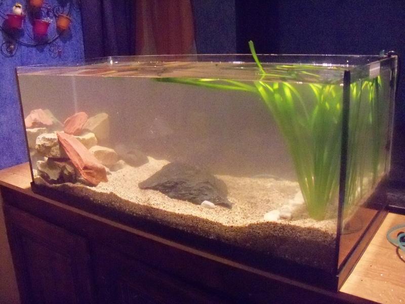 et de .... evolution d'un bac jusqu'a la fish room !! 100_2519