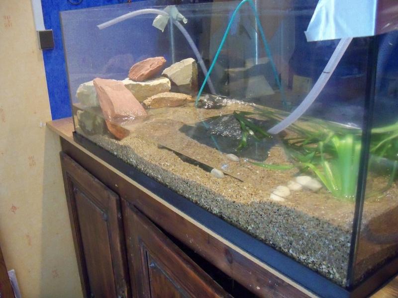 et de .... evolution d'un bac jusqu'a la fish room !! 100_2520
