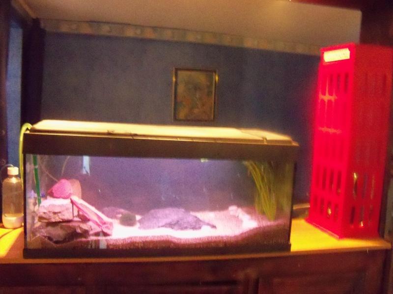 et de .... evolution d'un bac jusqu'a la fish room !! - Page 2 100_2521