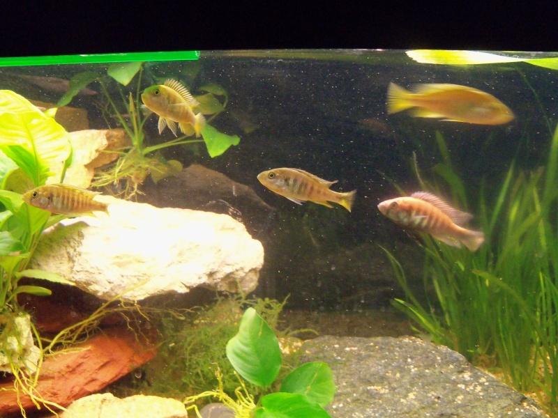 et de .... evolution d'un bac jusqu'a la fish room !! - Page 5 100_2613