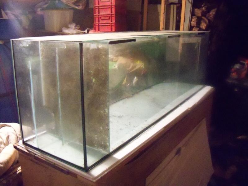 et de .... evolution d'un bac jusqu'a la fish room !! - Page 6 100_2615