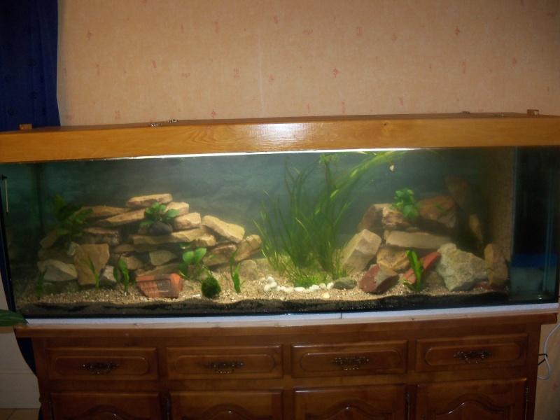 et de .... evolution d'un bac jusqu'a la fish room !! - Page 12 100_2826