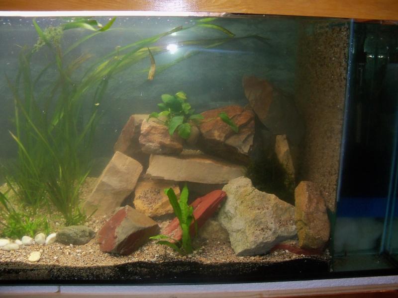 et de .... evolution d'un bac jusqu'a la fish room !! - Page 12 100_2827